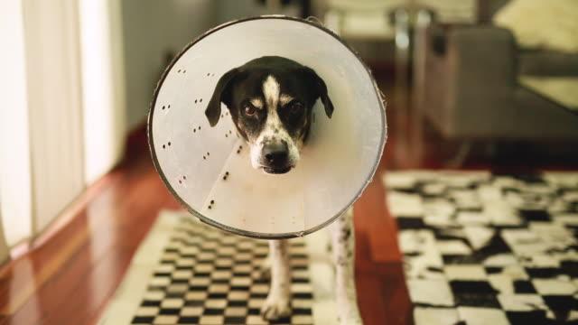 コーンと犬 - イヌ科点の映像素材/bロール