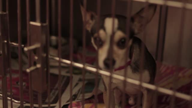 dog_chihauha_animal_shelter_cage - kafes sınırlı alan stok videoları ve detay görüntü çekimi