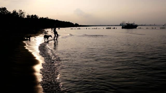 hunde und menschen am strand bei sonnenuntergang - bucht stock-videos und b-roll-filmmaterial