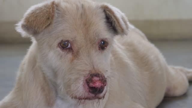 犬は幸せです - イヌ科点の映像素材/bロール