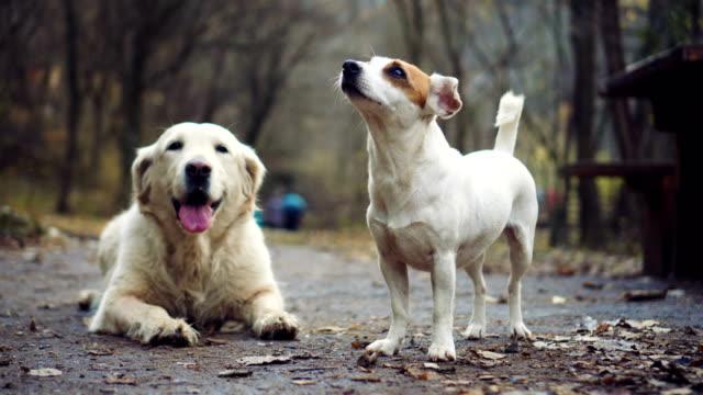 Hunde im herbstlichen Wald – Video