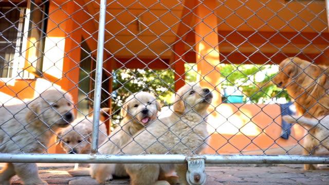 hunde im käfig - käfig stock-videos und b-roll-filmmaterial