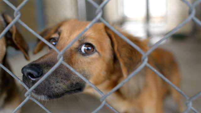 hunde im tierheim hinter käfig net. auf der suche und wartet auf menschen zu verabschieden - käfig stock-videos und b-roll-filmmaterial