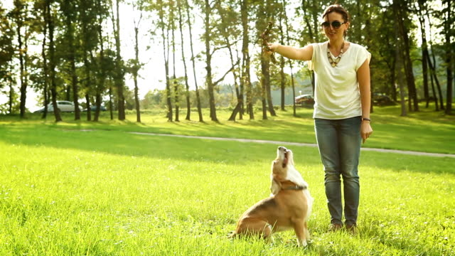 Dog's jumping trying to get the stick, which master has video