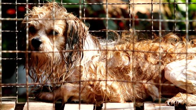 dogs locked in the cage - kafes sınırlı alan stok videoları ve detay görüntü çekimi