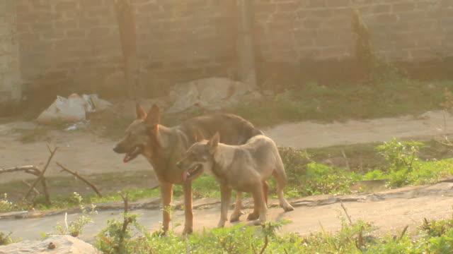 dogs mating dogs mating videos of dogs mating stock videos & royalty-free footage