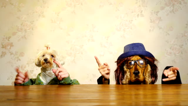 Der Dog-party – Video