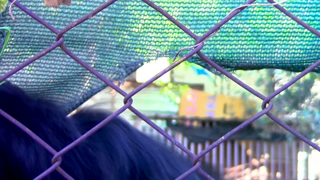Dogs Playing Behind Garden Fences video