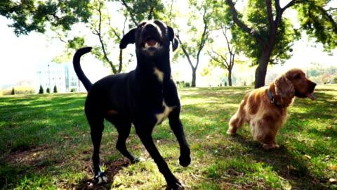 vídeos y material grabado en eventos de stock de perros jugando en el parque - un animal