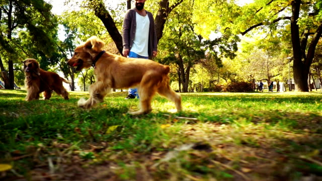dogs playing in park - cagnolino video stock e b–roll
