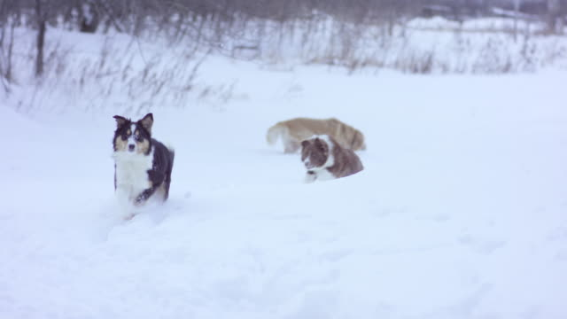 Dogs Playing Together video