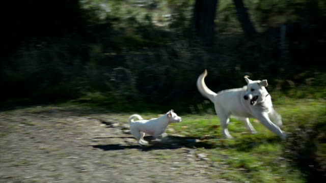 Dogs playing video