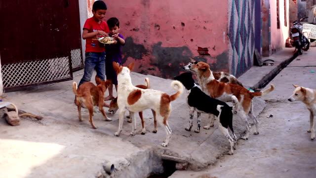 Perros y cachorros a la espera de pan - vídeo
