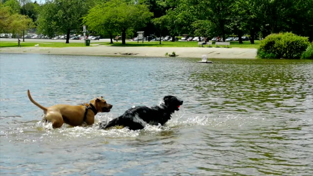 dogs running out of water video