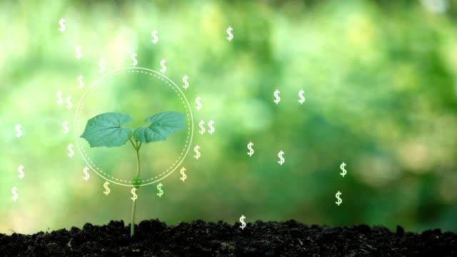 dollar geldbaum im hologramm geld von einem baum, finanzielle geschäftsidee erfolg. - ersparnisse stock-videos und b-roll-filmmaterial