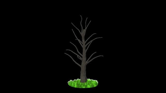 Dollar tree growing, wind blow, Alpha Channel