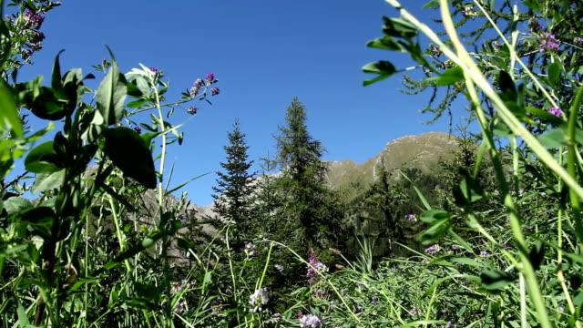vídeos y material grabado en eventos de stock de carro de alta definición. una ejecución en las flores silvestres. - flor silvestre