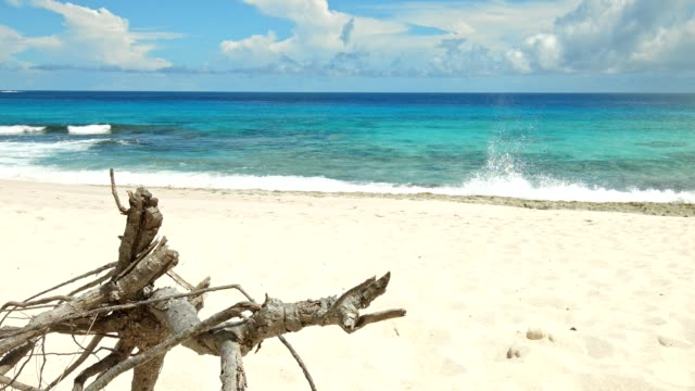 Dolly: Anse Bazarca, Mahé island, Seychelles video