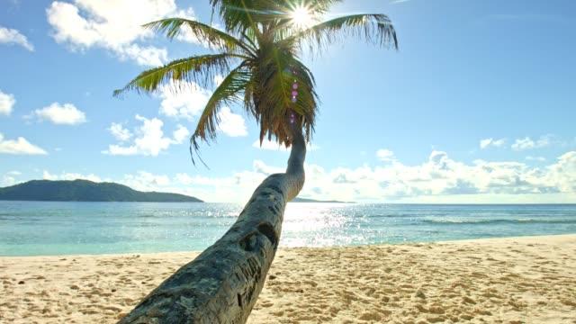 Dolly: Beautiful beach of Anse Fourmis video