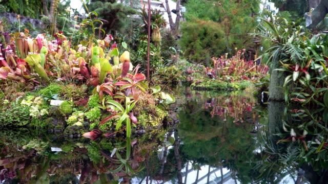 Dolly: renkli Nepenthes ve tropikal bitki video