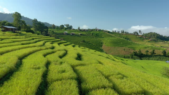 dolly forward of rice terrace with blue sky - taras ryżowy filmów i materiałów b-roll
