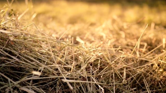 vidéos et rushes de dolly: hay sur le terrain en été - foin