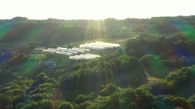 Dolly move in aerial view of slowly floating vapor over lake, sunrise with Sun rays and Swallows are fly around.