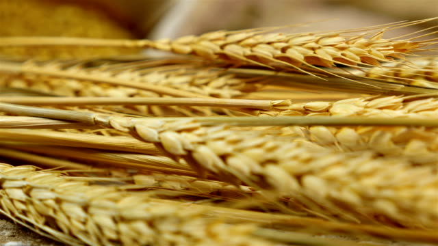 Dolly of golden wheat stems laying on an old wooden table video