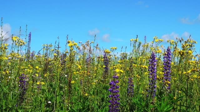 Dolly shoot of landscape with flowers and blue sky. video