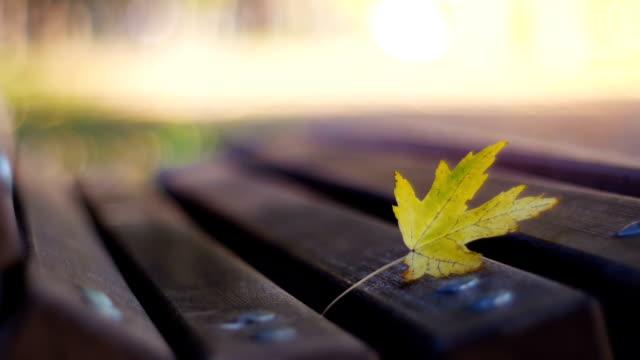 vídeos de stock, filmes e b-roll de dolly shot - folhas de outono em um banco do parque - setembro amarelo