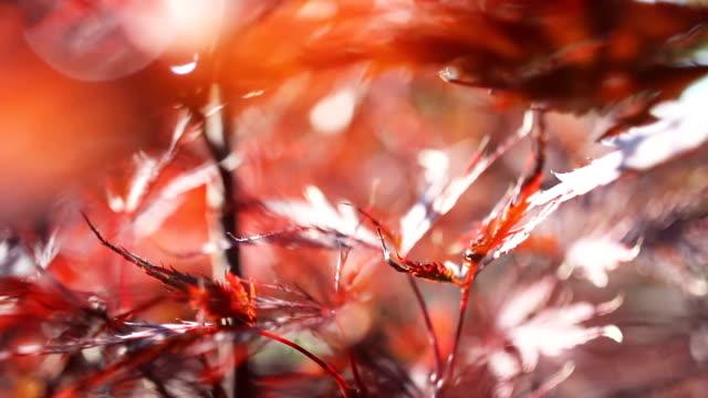 ドリー ショット。枝や木の葉を移動カメラ - スタビライザー使用点の映像素材/bロール