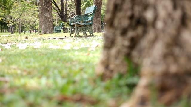 dolly girato : vuoto panchina nel parco verde al mattino - carrellata video stock e b–roll