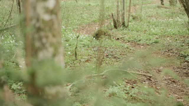 Dolly shot of a forest floor in spring video