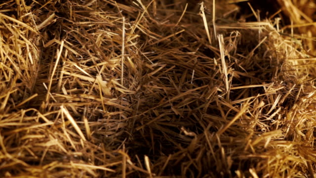 dolly shot of a pile of straw video