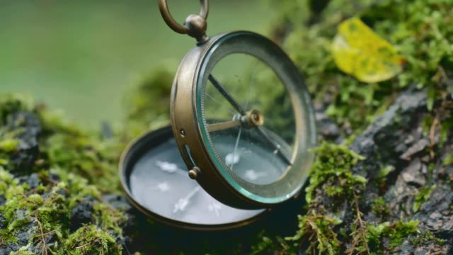 dolly shot of a vintage compass on the  tree trunk - sud est video stock e b–roll