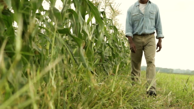 Dolly Shot of African American Farmer video