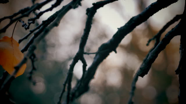 dolly shot of autumn leaves on tree. shot in slow motion - ноябрь стоковые видео и кадры b-roll