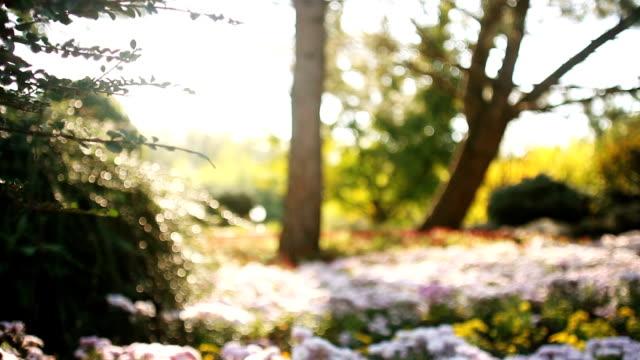 Dolly shot of defocused flowerbed backlit by the sun Dolly shot of defocused flowerbed backlit by the sun flowerbed stock videos & royalty-free footage