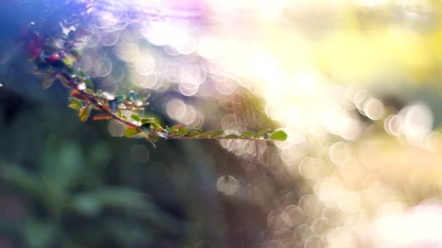 sun の多重花壇バックライトのドリー ショット - 花壇点の映像素材/bロール