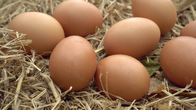 Dolly shot of hens eggs on the straw nest.