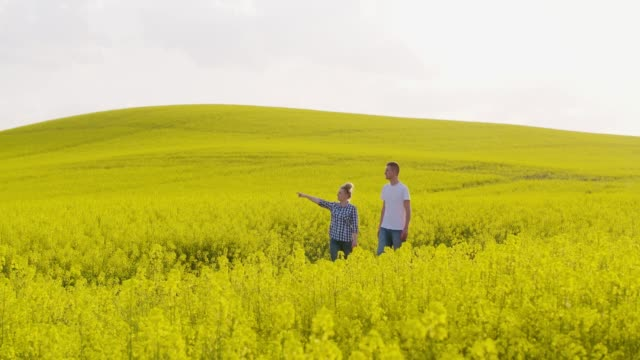 farmers discussing over digital tablet at rapeseed field - canola video stock e b–roll