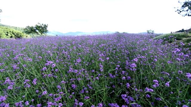 Dolly shot of purple flower video