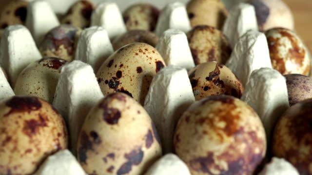 Dolly shot of quail eggs in antistrike packaging video
