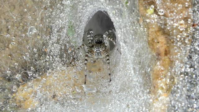 Dolly shot of spider on cobweb.