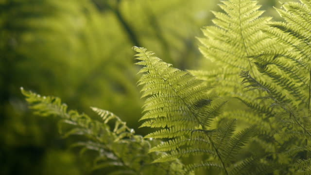 Dolly shot of thick green ferns video