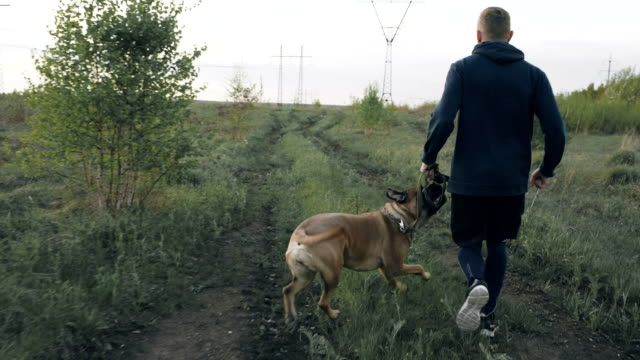 Dolly shot of Young sporty man running with his bullmastiff dog outdoors at park and preparing his pet for competition