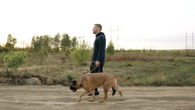 Dolly shot of Young sporty man walking with his bullmastiff dog outdoor at nature after gym training