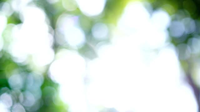 4 k ドリー ショット、太陽フレアと熱帯雨林の緑のボケ味。 - 木漏れ日点の映像素材/bロール