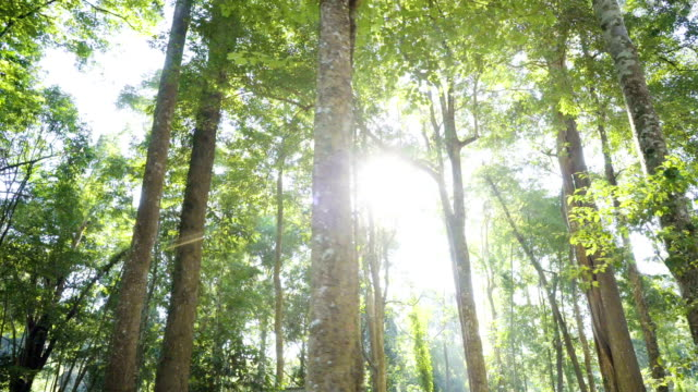 4K Dolly shot, Tropical forest view with sun flare in morning. video