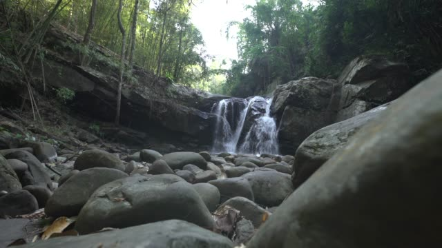 dolly zoom out shot of waterfall in rainforest with rock in foreground - pianta sempreverde video stock e b–roll